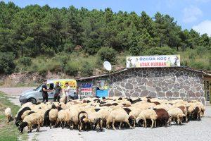 Kadıköy-adak