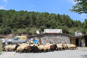 Kadıköy-ucuz-adak-satış-yerleri