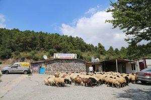 Kadıköy-adak (2)