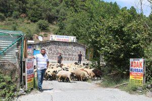 Kadıköy-adak-al