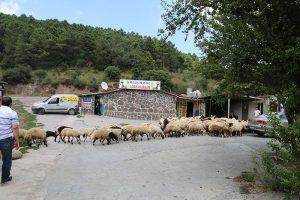 Kadıköy-adak-koç