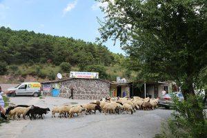 Kadıköy-adak-kurbanı
