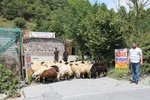 Kadıköy-adak-kurban-merkezi