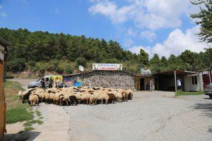 Kadıköy-adak-satış-yerleri