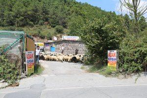 Kadıköy-adak-satanlar