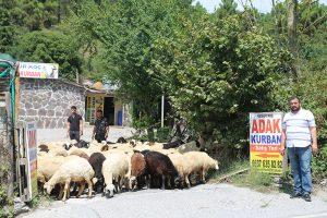 Kadıköy-kurban-satanlar